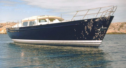 61' newly launched